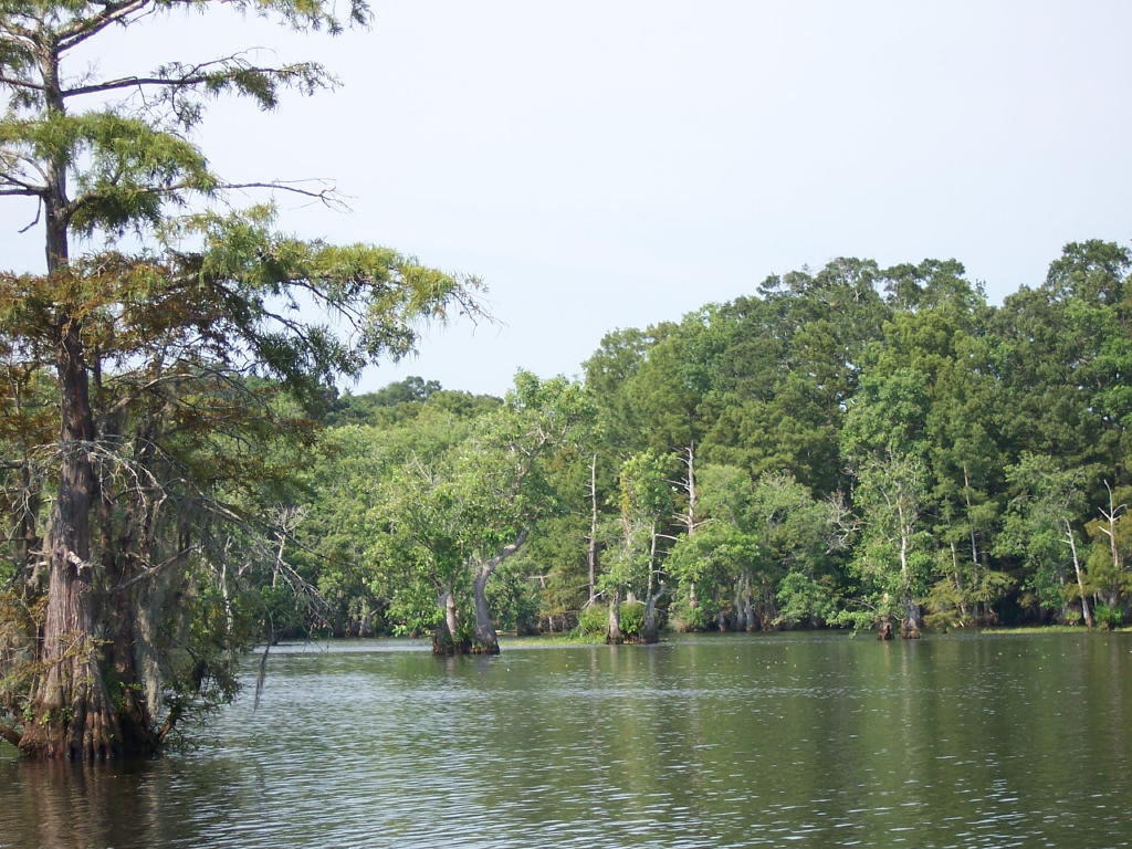 louisiana and chico state park
